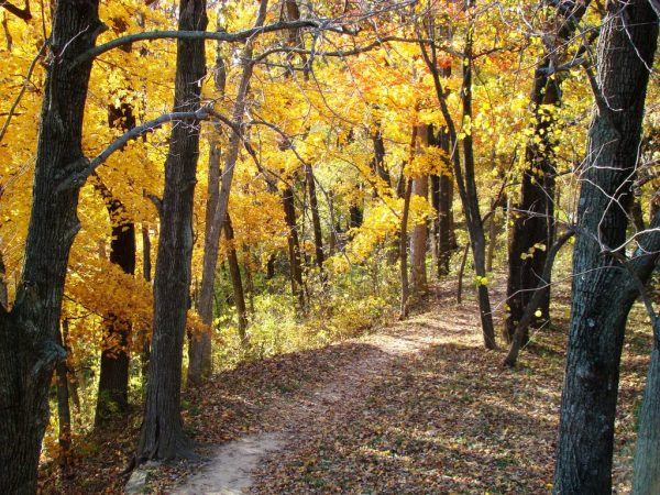 fall-colors-at-pere-marquette-state-park
